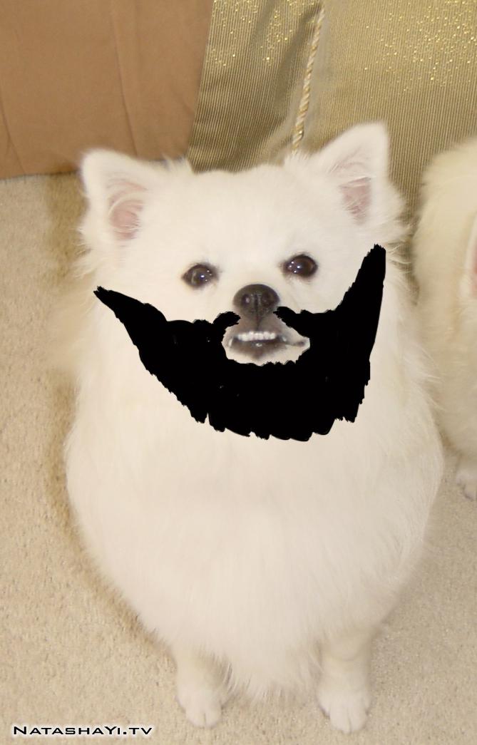 fear-the-beard-tn